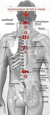 Может ли болеть плечо при шейном остеохондрозе